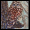 Barred Owl in Winter Pastel, 2014